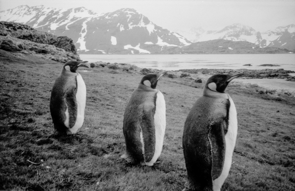 N9003 - Three wise Penguins