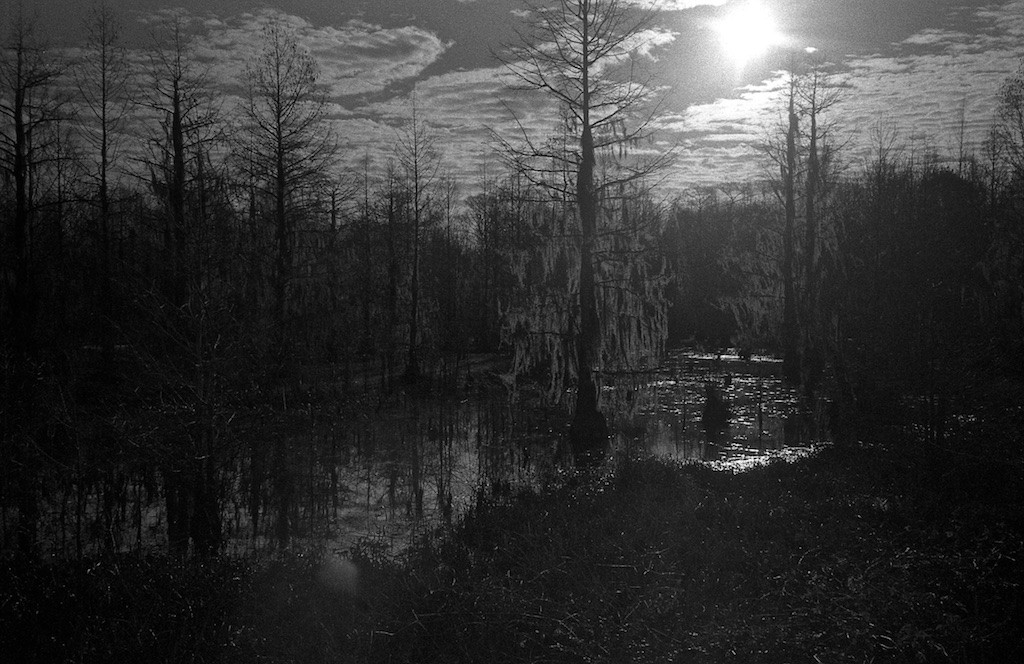 swamp for contest 179
