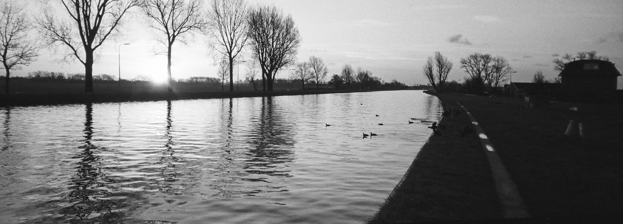 Landscape with trees photographed with Minolta Riva Panorama on Kodak Tri-X 400