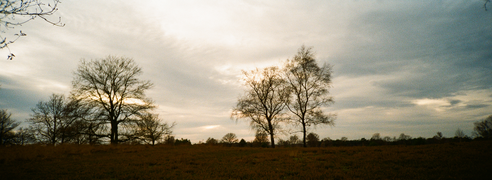 Landscape with trees photographed with Minolta Riva Panorama on Kodak Gold 200