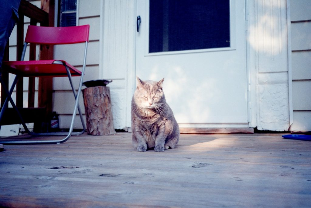 Photo of cat sitting on a porch made with the Minolta TC-1