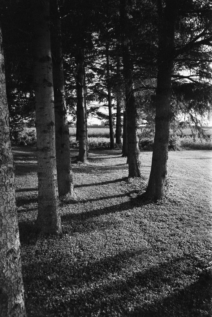 A Stand of Pines - TMax 400