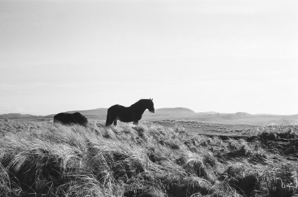 5 Frames with a Leica M4-P on a Whisky Pilgrimage – By Nick Holt