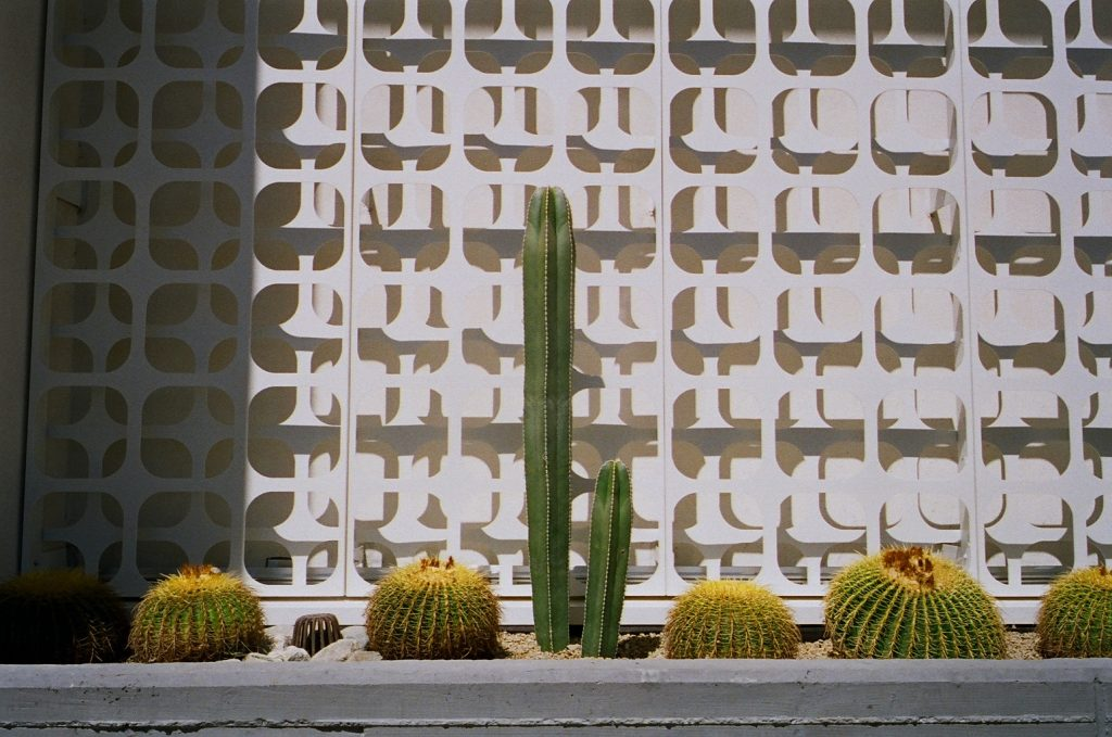 Photo of cacti in front of the Kimpton Rowan Hotel made with the Yashica T3 Super D