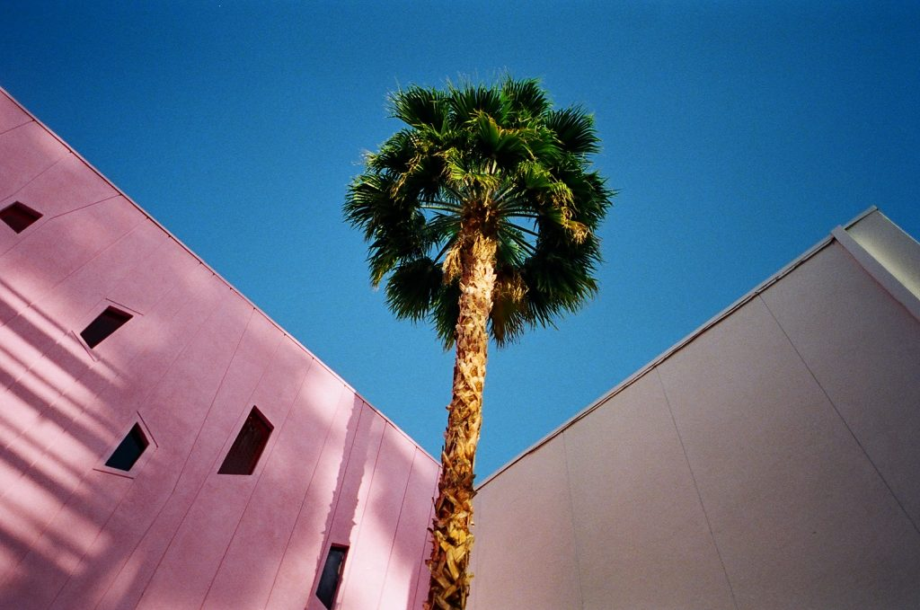 Photo of a palm tree in Palm Springs made with a Yashica T3 Super D