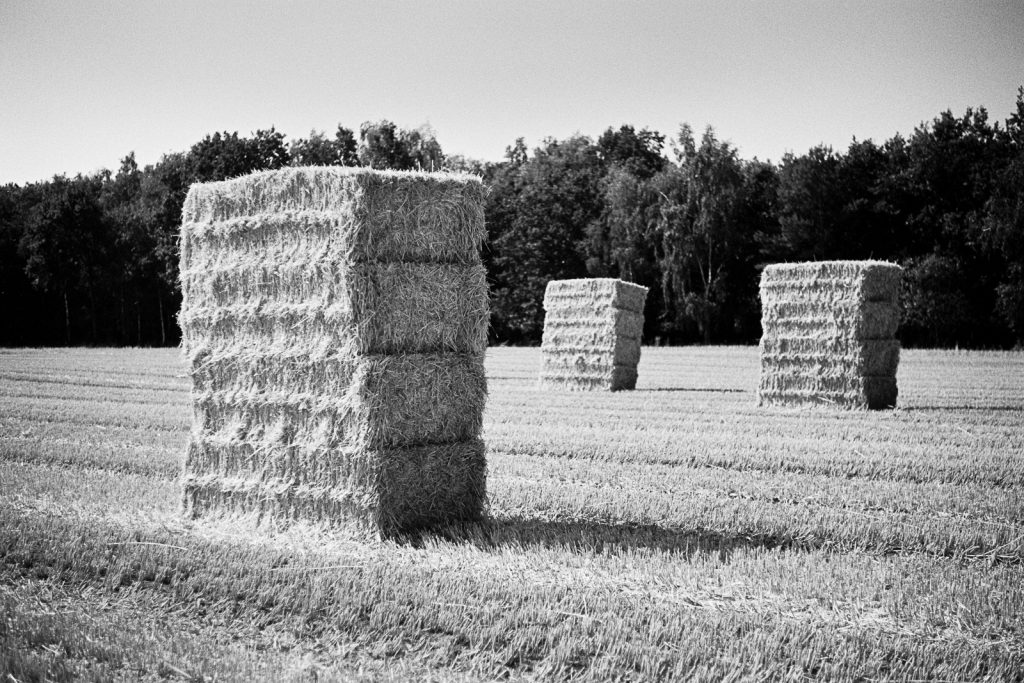 Straw bales standing on a wheatfield as a facet of the agricultural landscapes found in northern Germany.