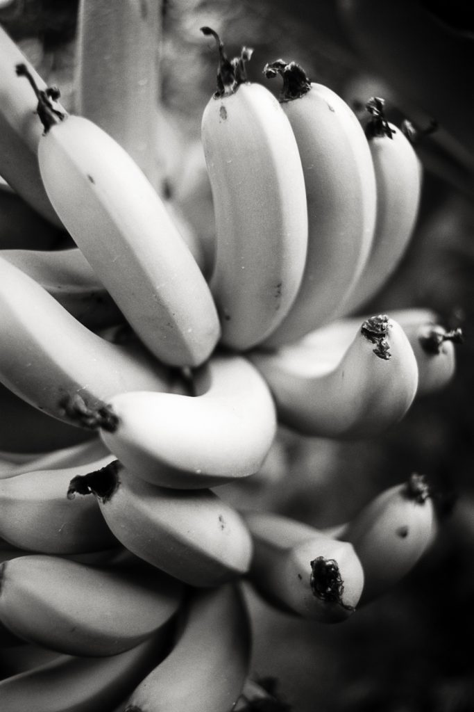 Black-and-white image of some bananas.