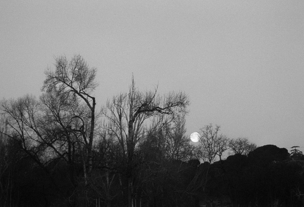 The moon over some trees