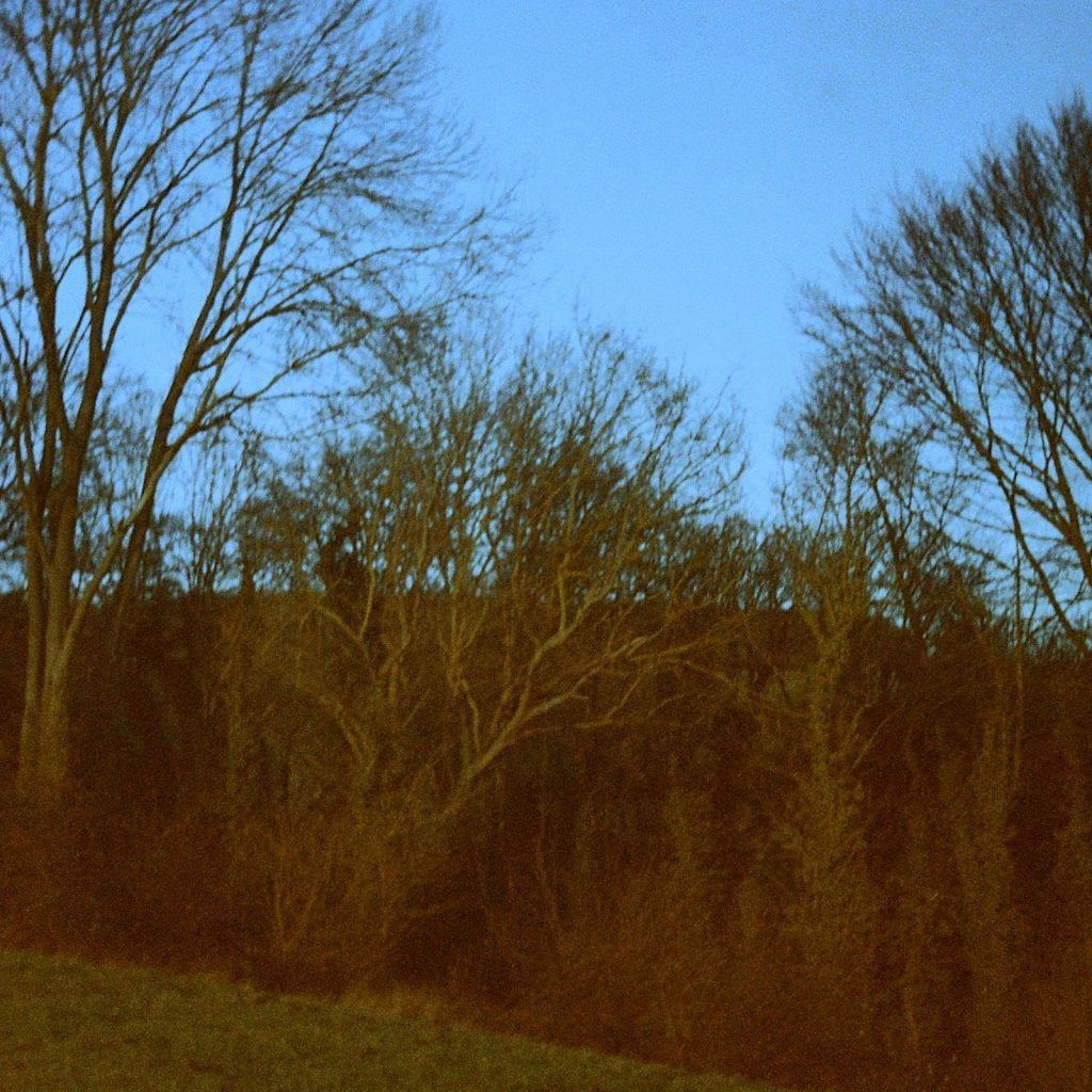mixture of trees in failing light