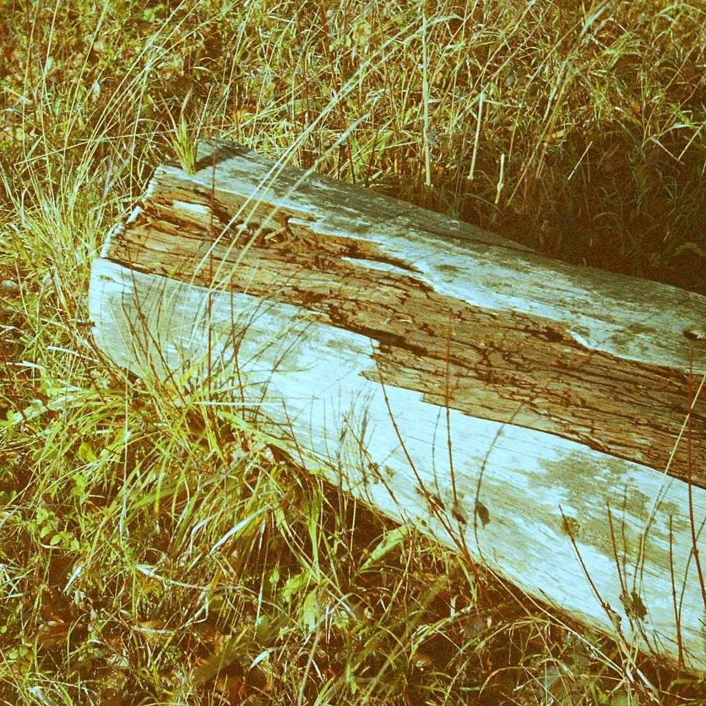 log laying on the grass