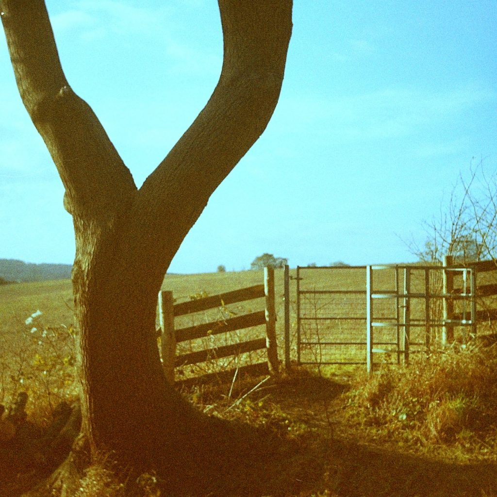 tree and gate
