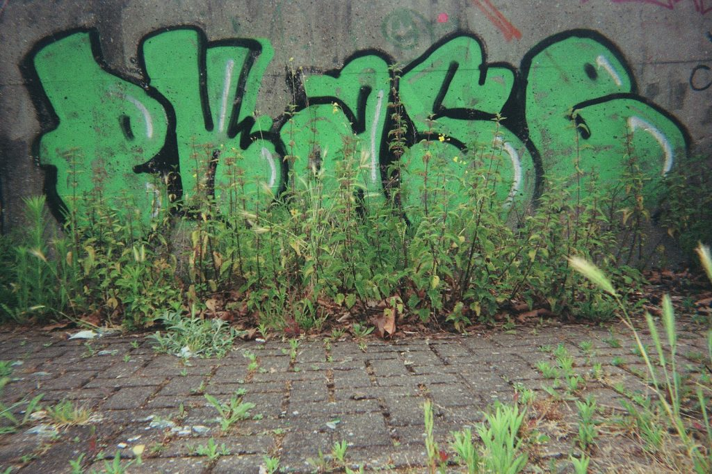 photo of urban art in green letters