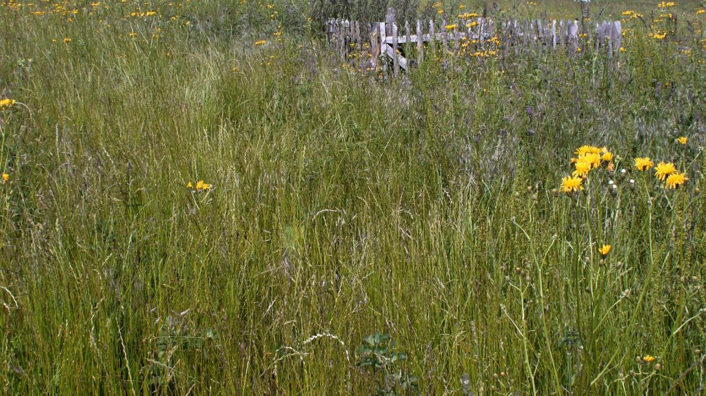 wild meadow photo