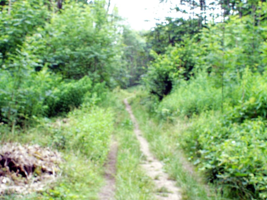 blurred image of woodland