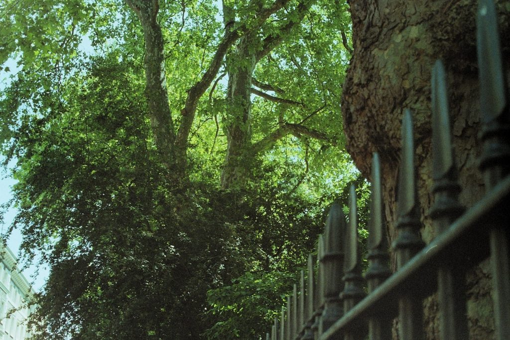 photograph of trees and railings in a london park