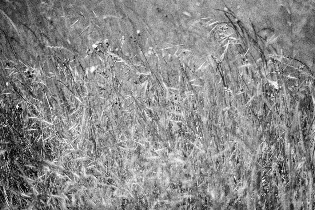 black and white photo of countryside field