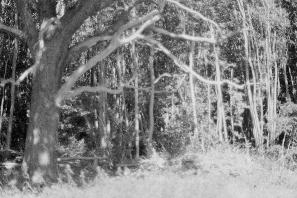 black and white photo of tree