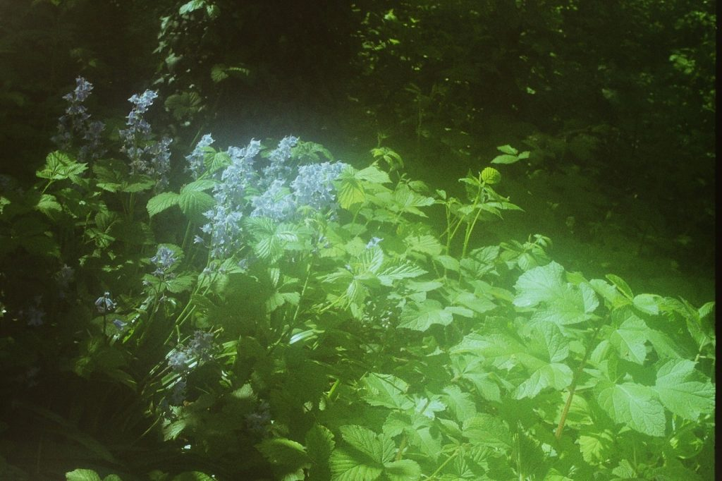 flowers and leaves in woodland