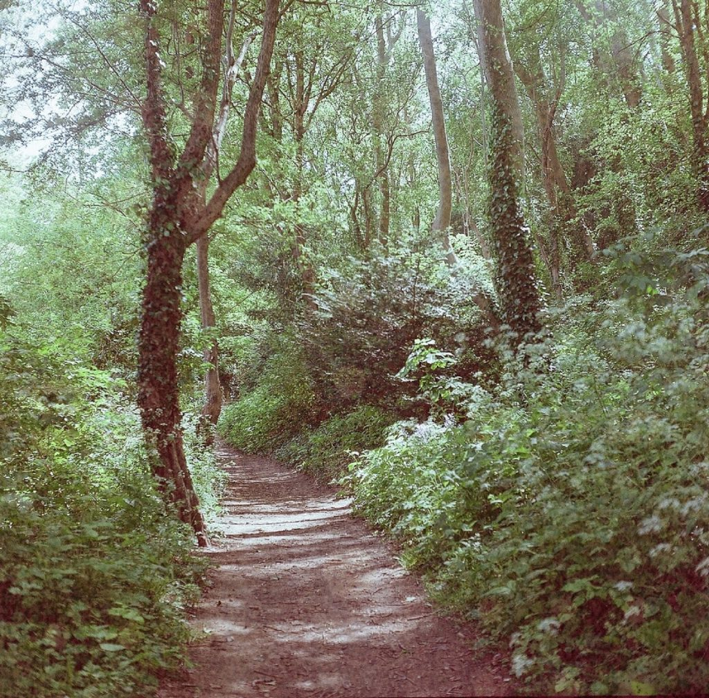 photo of woodland with path