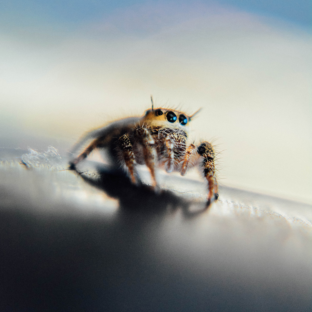A jumping spider on my car's rear right bumper