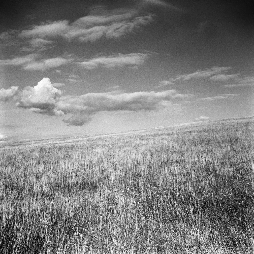 A grass plain, with an angled horizon, with fluffy clouds