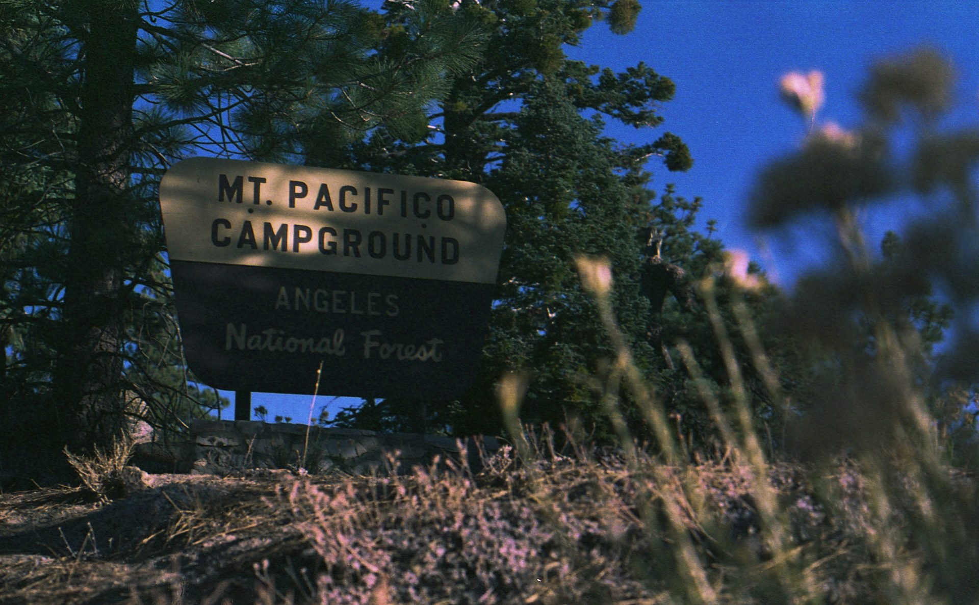 Mt Pacifico Campground Sign