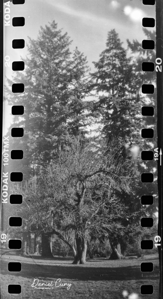 I had to try a vertical photo with the No. 0 Folding Pocket Kodak
