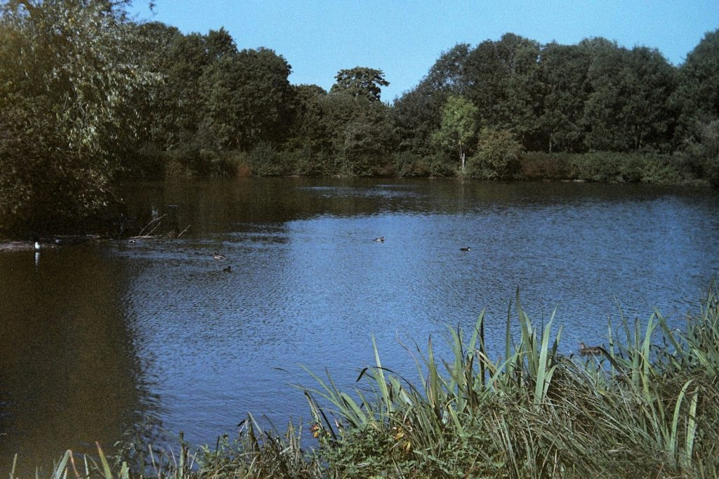 colour photo of a duck pond