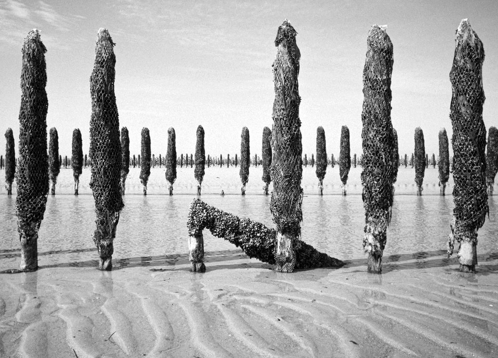 Mussels cultivation in Pink Floyd land – Sony NEX with Olympus BCL 15mm