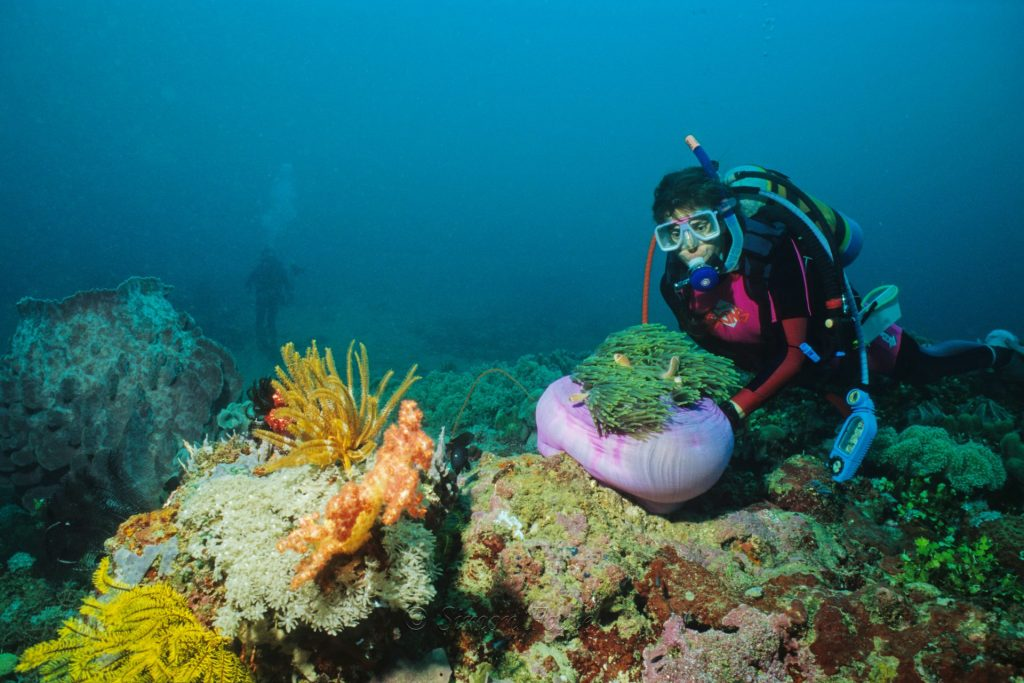 Cathie and anemone fish