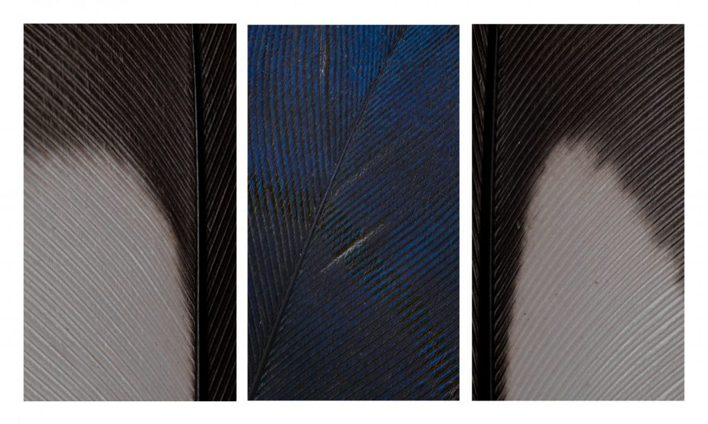 Triptych - Philip A