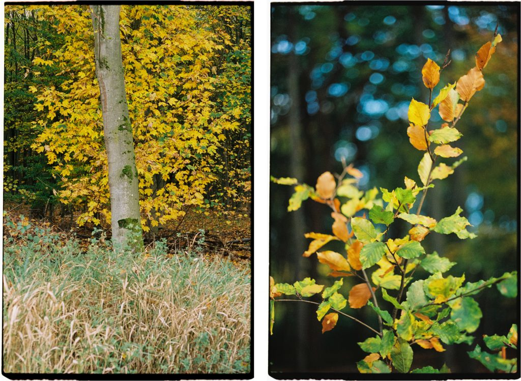 Two photographs of a forest in autumn, shot on Lomography 800 film