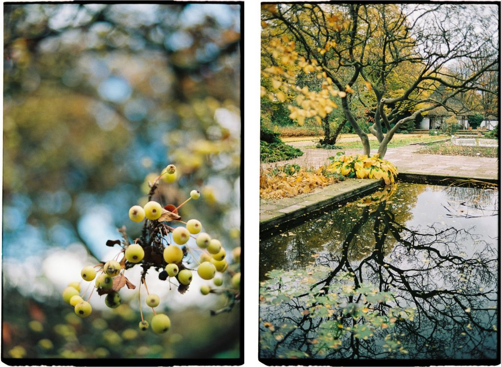 two photographs of plants in autumn