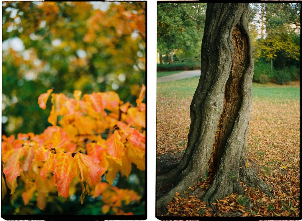 diptych of two photographs, showing orange leaves and a crippeld tree-trunk