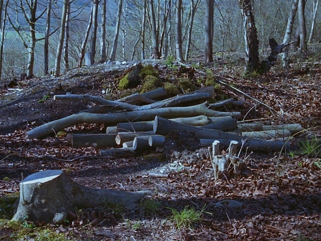 photo of coppiced woodland