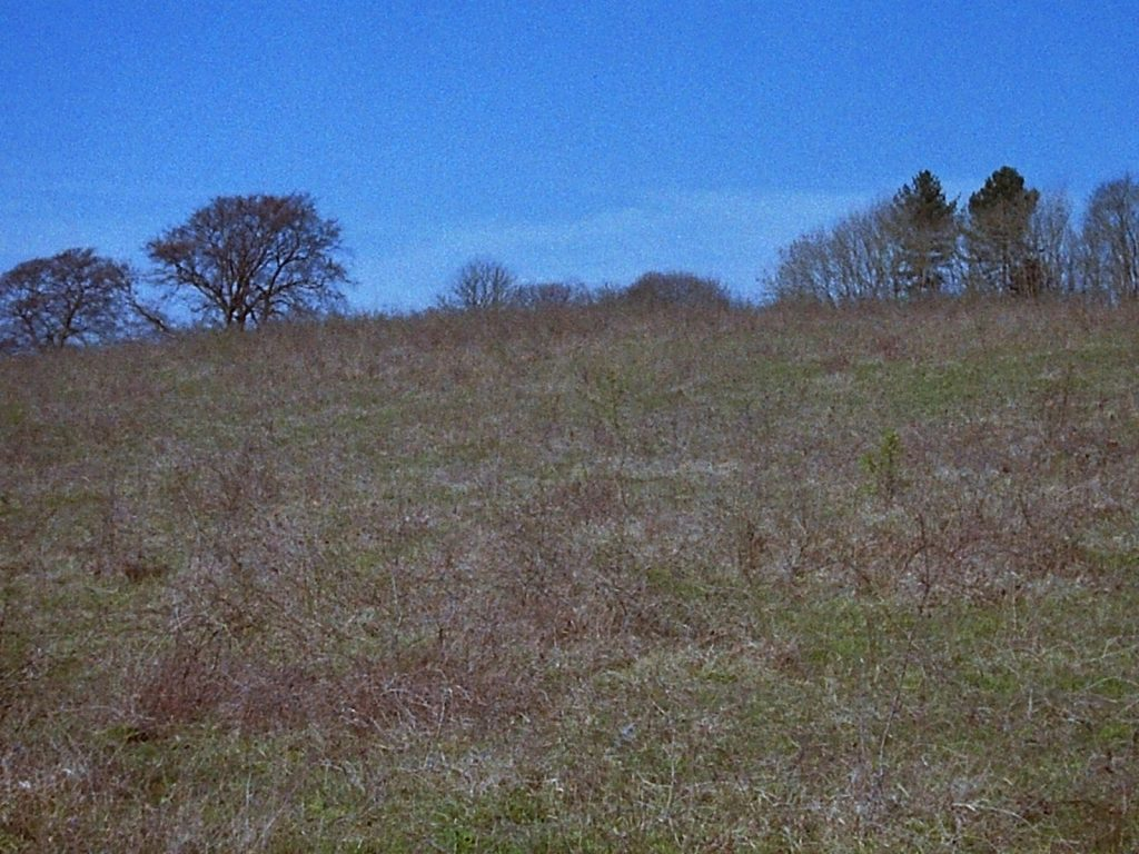 meadow grassland with treeline in the background