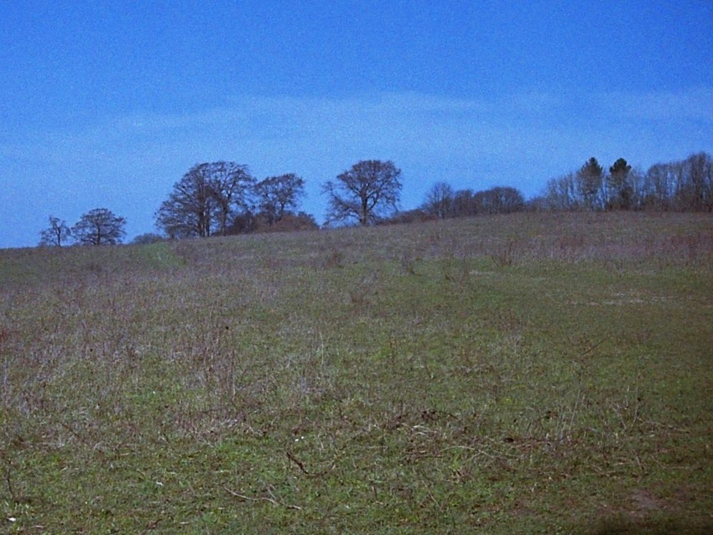 photo of a field with treeline in the background