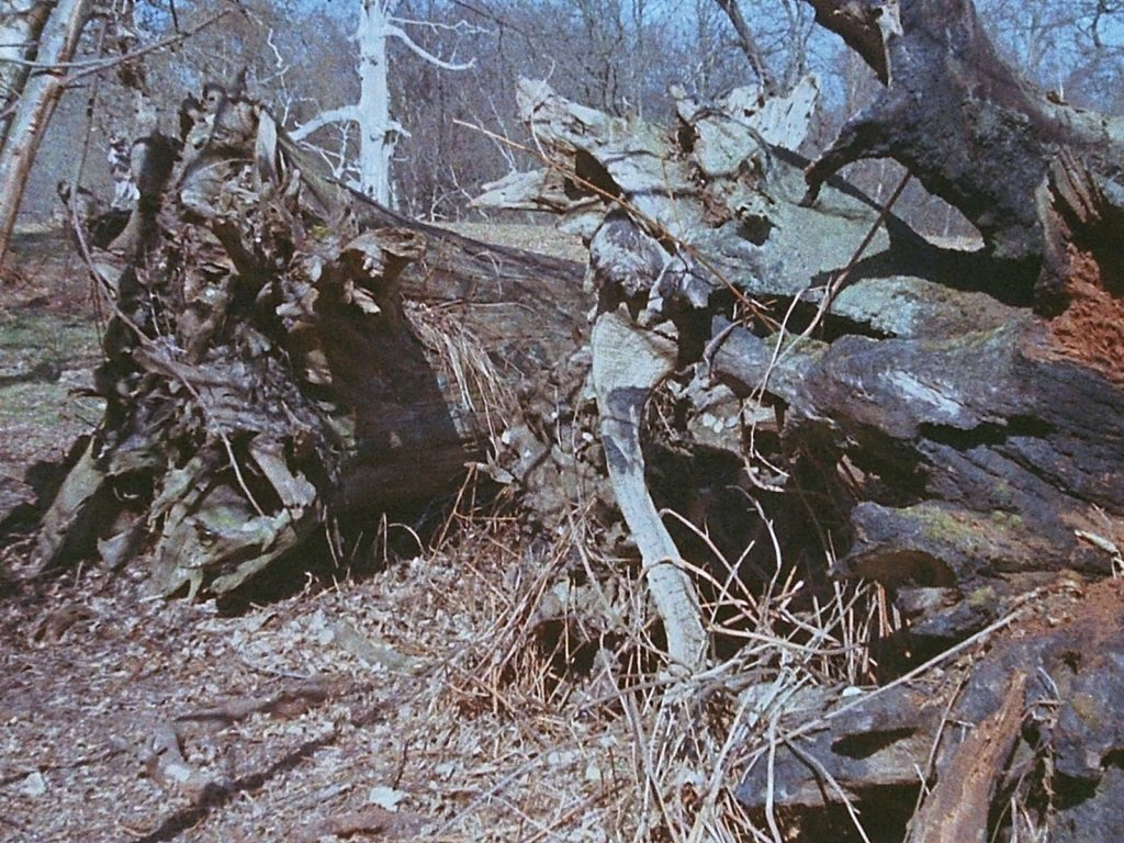 close up photograph of dead tree stumps
