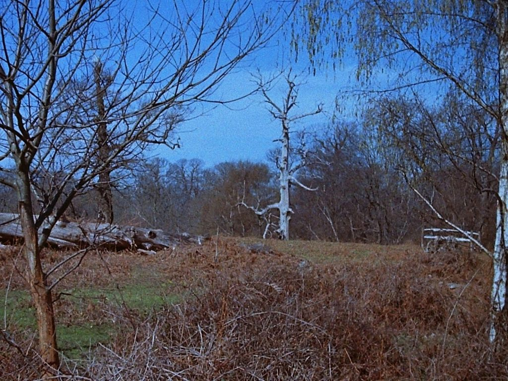 photograph of wood pasture
