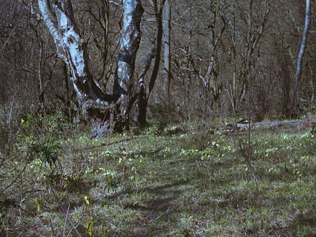 photo of some woodland flowers