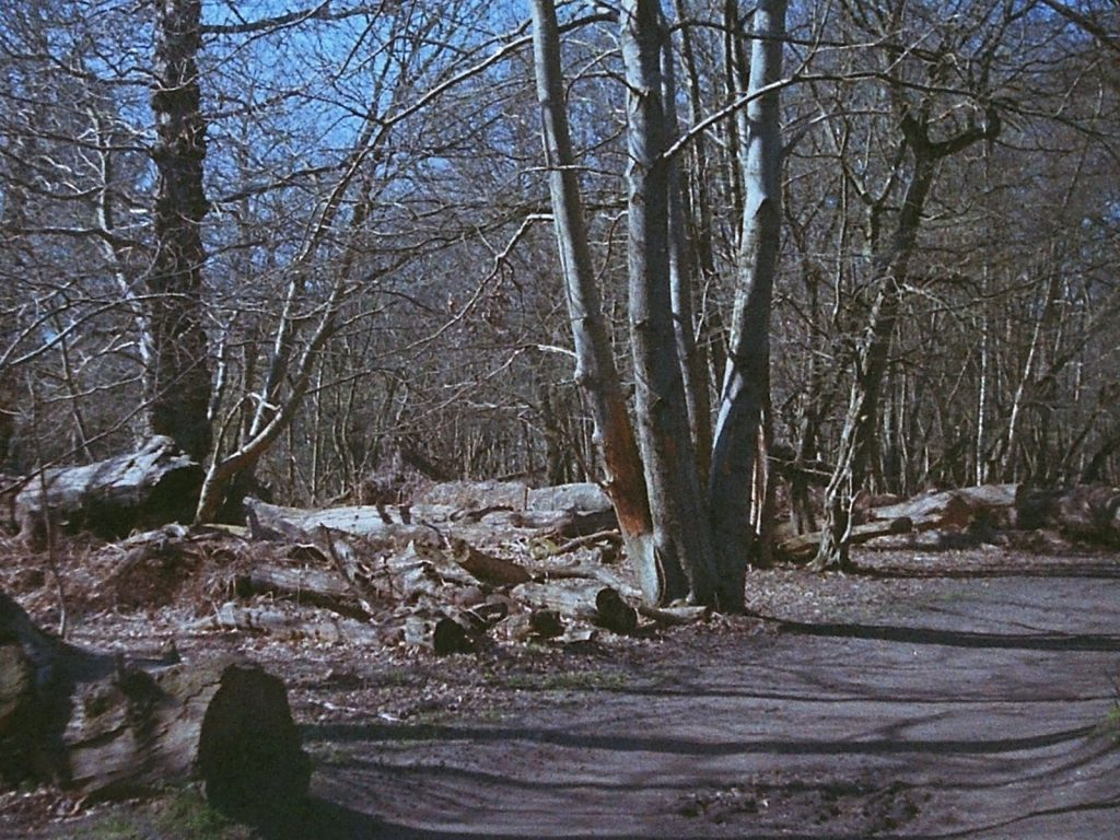 a photograph of a trackway through woodland