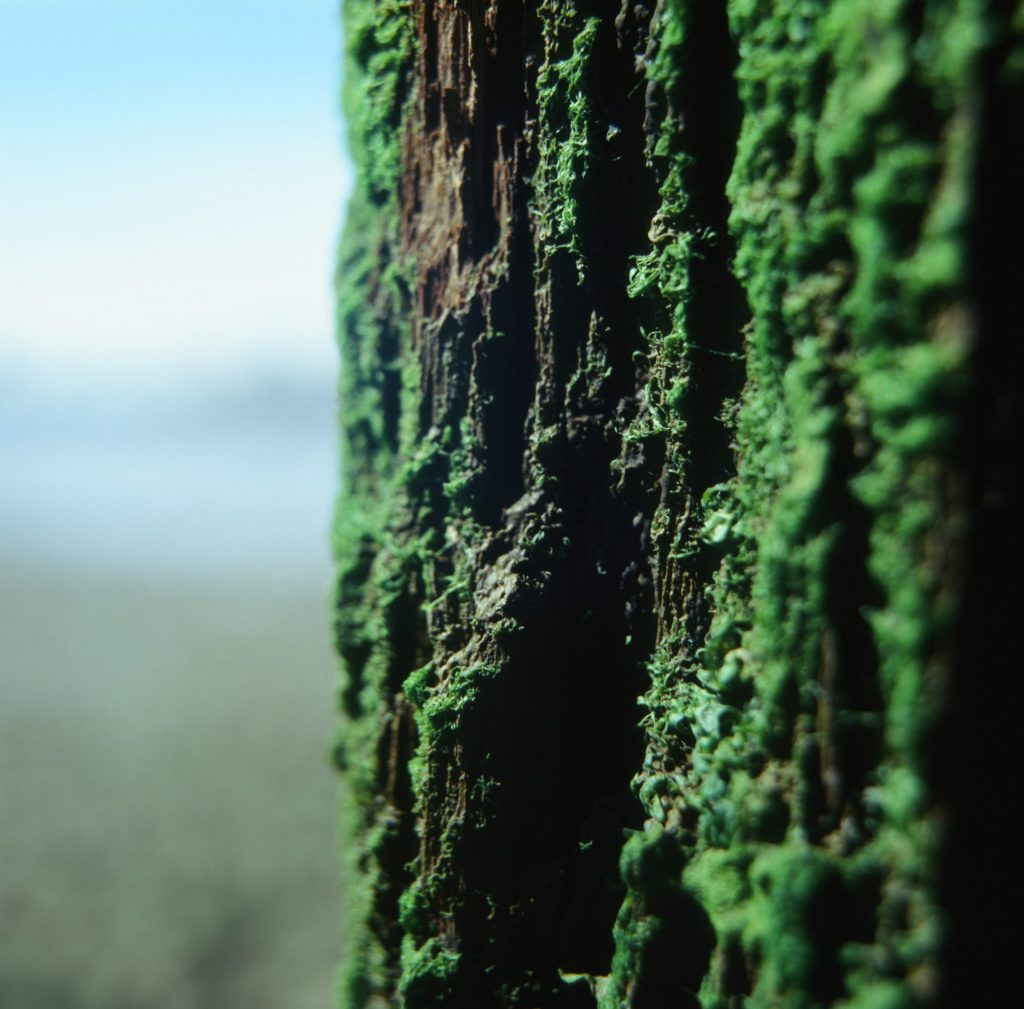 Moss-covered jetty support pillar