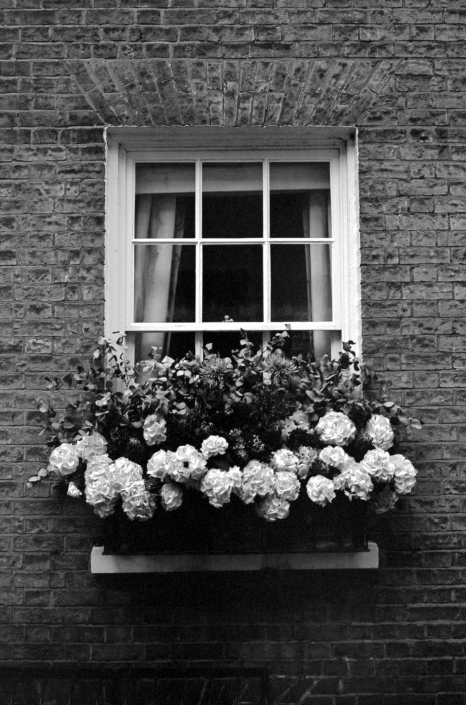 Flowers in Portugal Place, Cambridge.