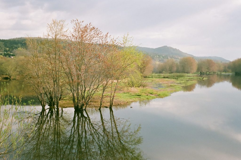 Trees reflected in river