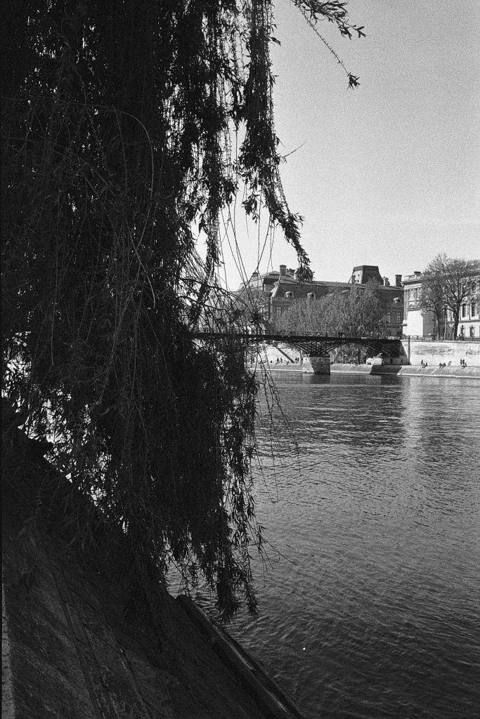 View of the Louvre next to a tree