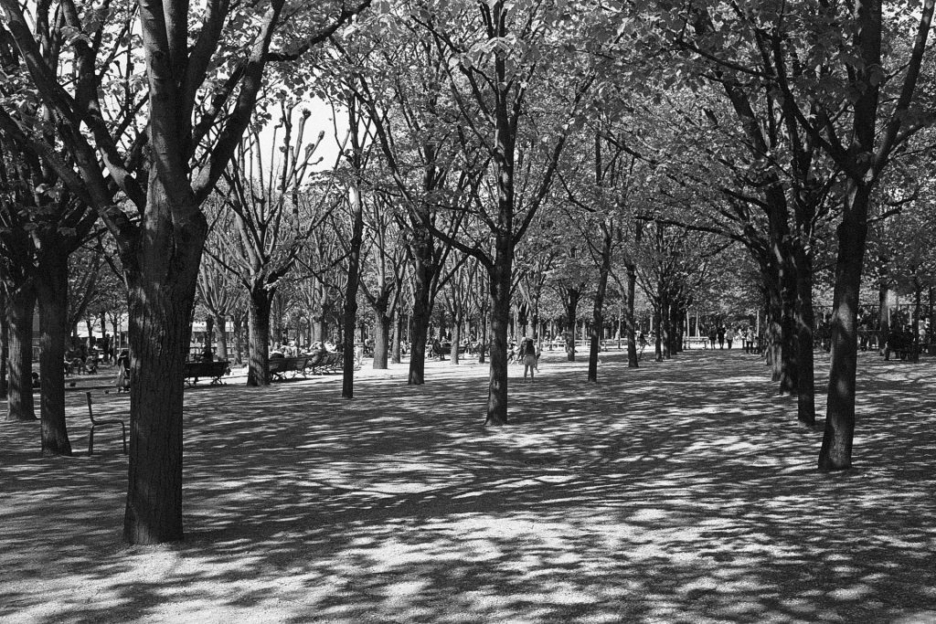 Aisle of trees with light shadows