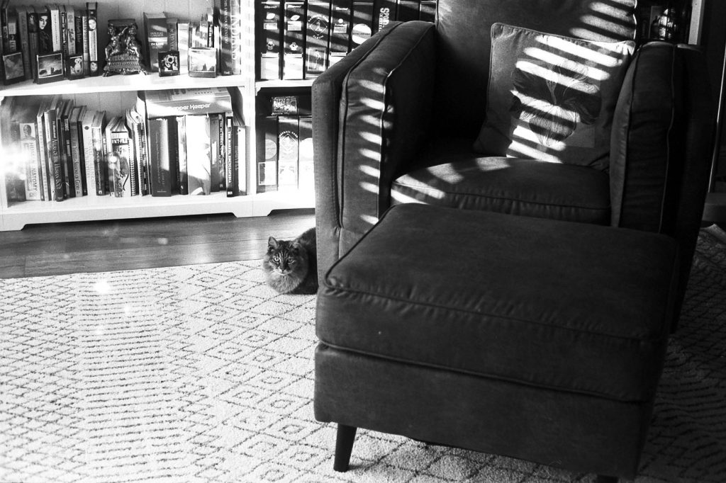 cat laying next to a chair
